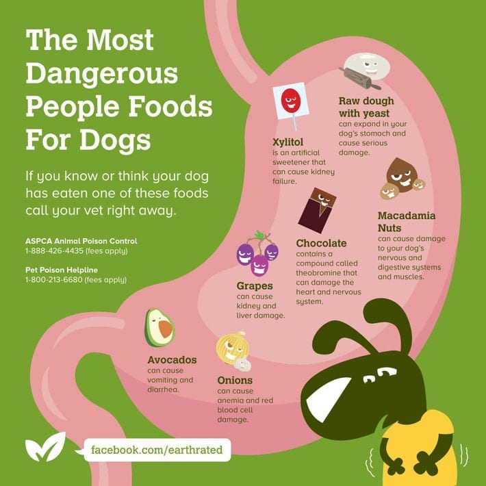 People Foods Toxic To Dogs