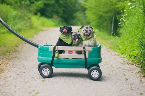 Prepping your Dog to be The Ultimate Road Trip Companion