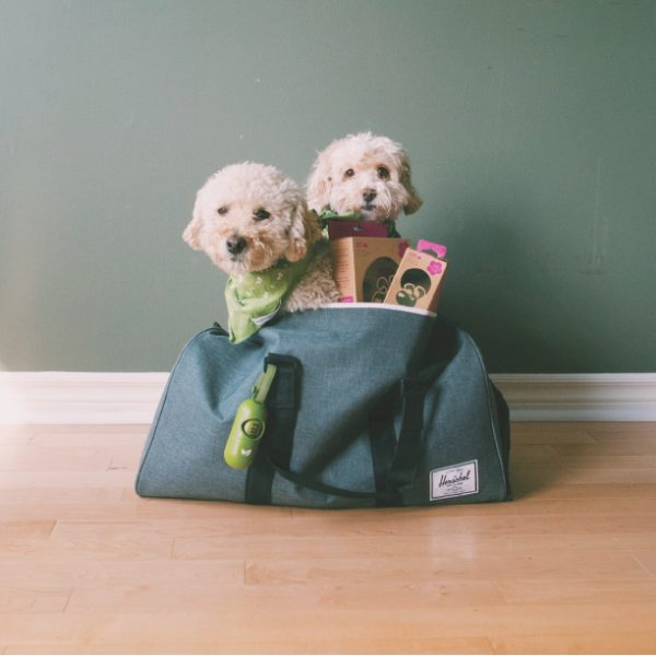 3 Tips for Planning a Dog-Friendly Vacation