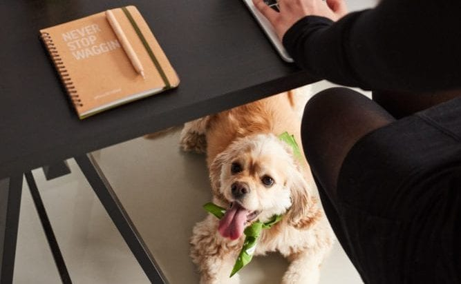 Our Top Bullet Journal Page Ideas for Dog Owners