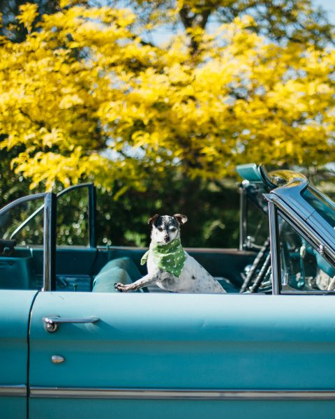 5 must-haves for the dog days of summer