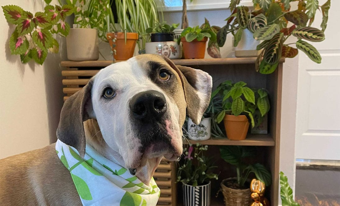 Top 10 Non-Toxic Indoor House Plants Safe for Your Dog