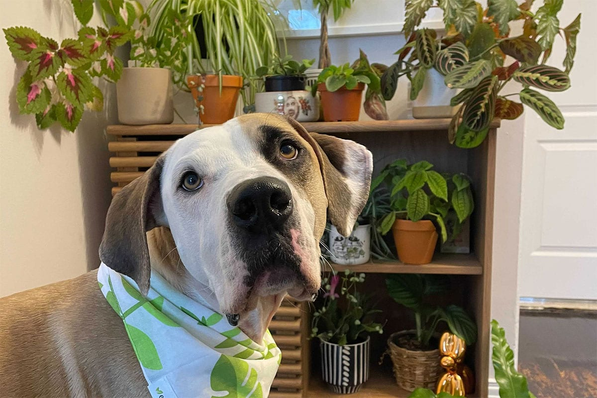 Top 9 Non-Toxic Indoor House Plants Safe for Your Dog