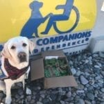 Canine-Companions-for-Independence-squashed