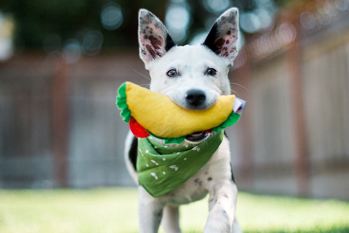 6 Easy DIY Dog Toys You Can Make at Home (Infographic)