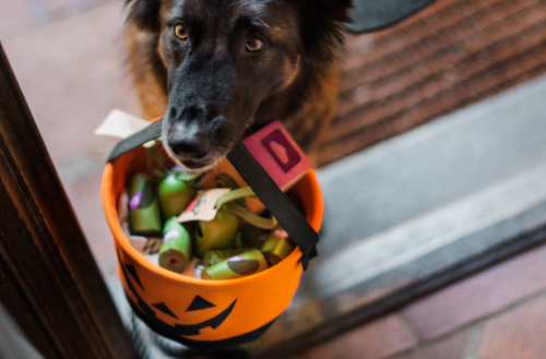 How To Craft a DIY Sushi Costume for Your Dog (Infographic)