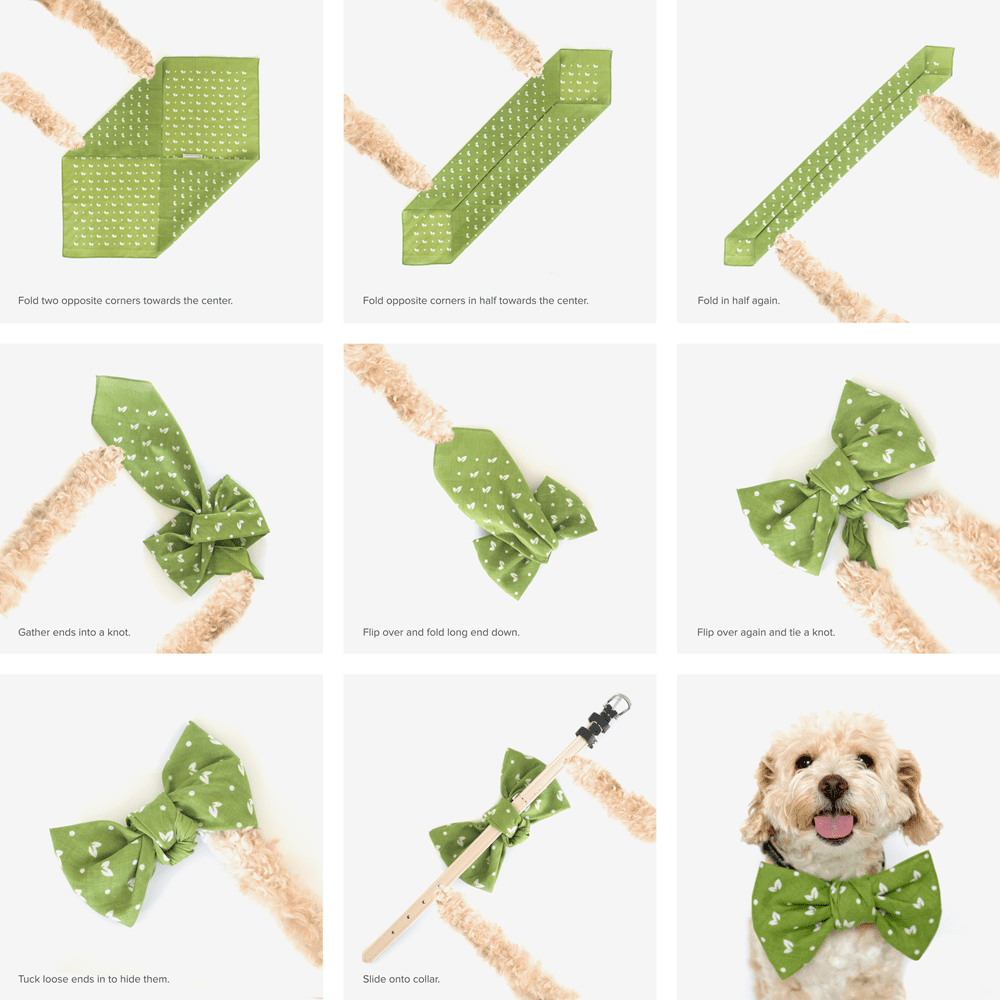How to tie a dog 71