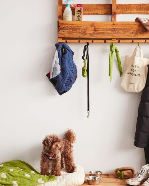 How to create a dog-friendly entryway