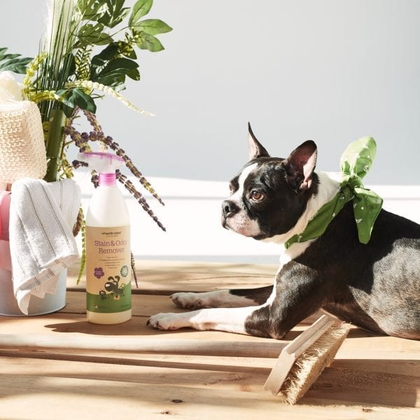 Spring cleaning for dog people