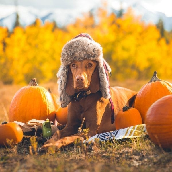 What we love most about fall