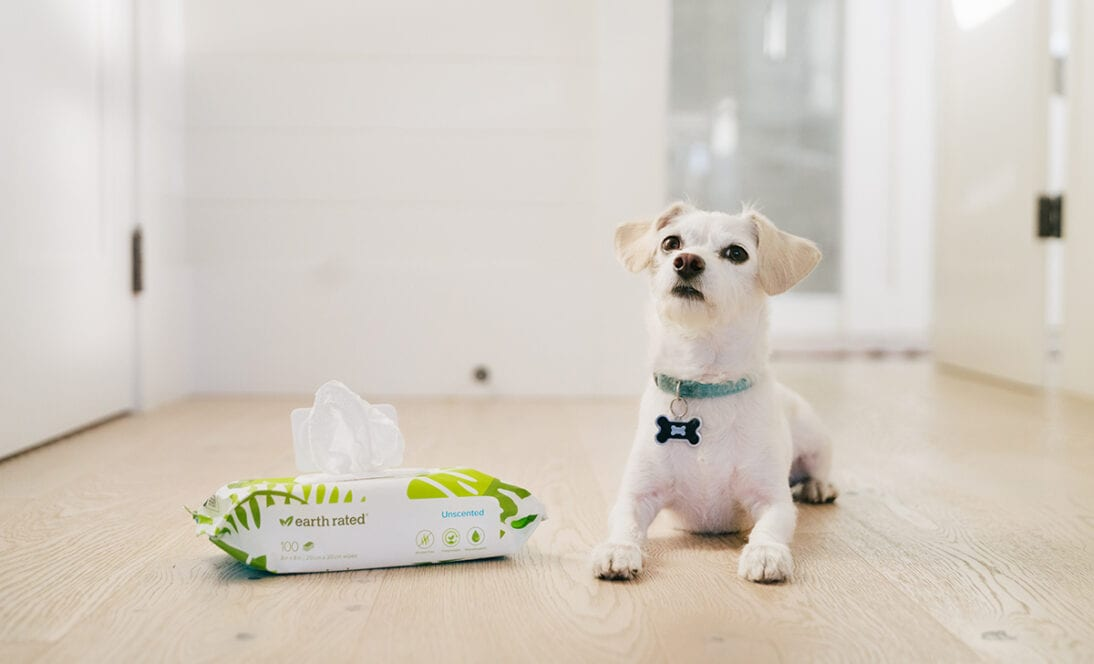 How to Teach Your Dog to Love Being Cleaned with Dog Wipes