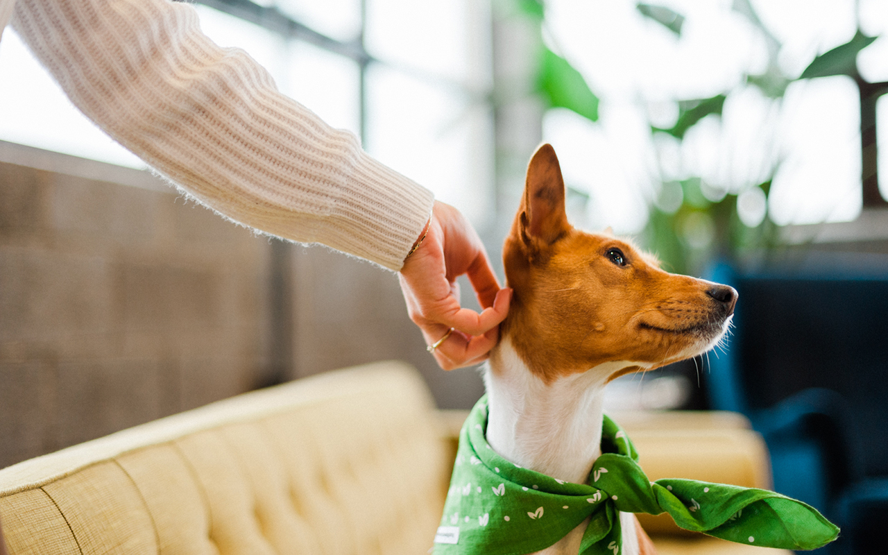 How-to-spot-fear-in-dogs