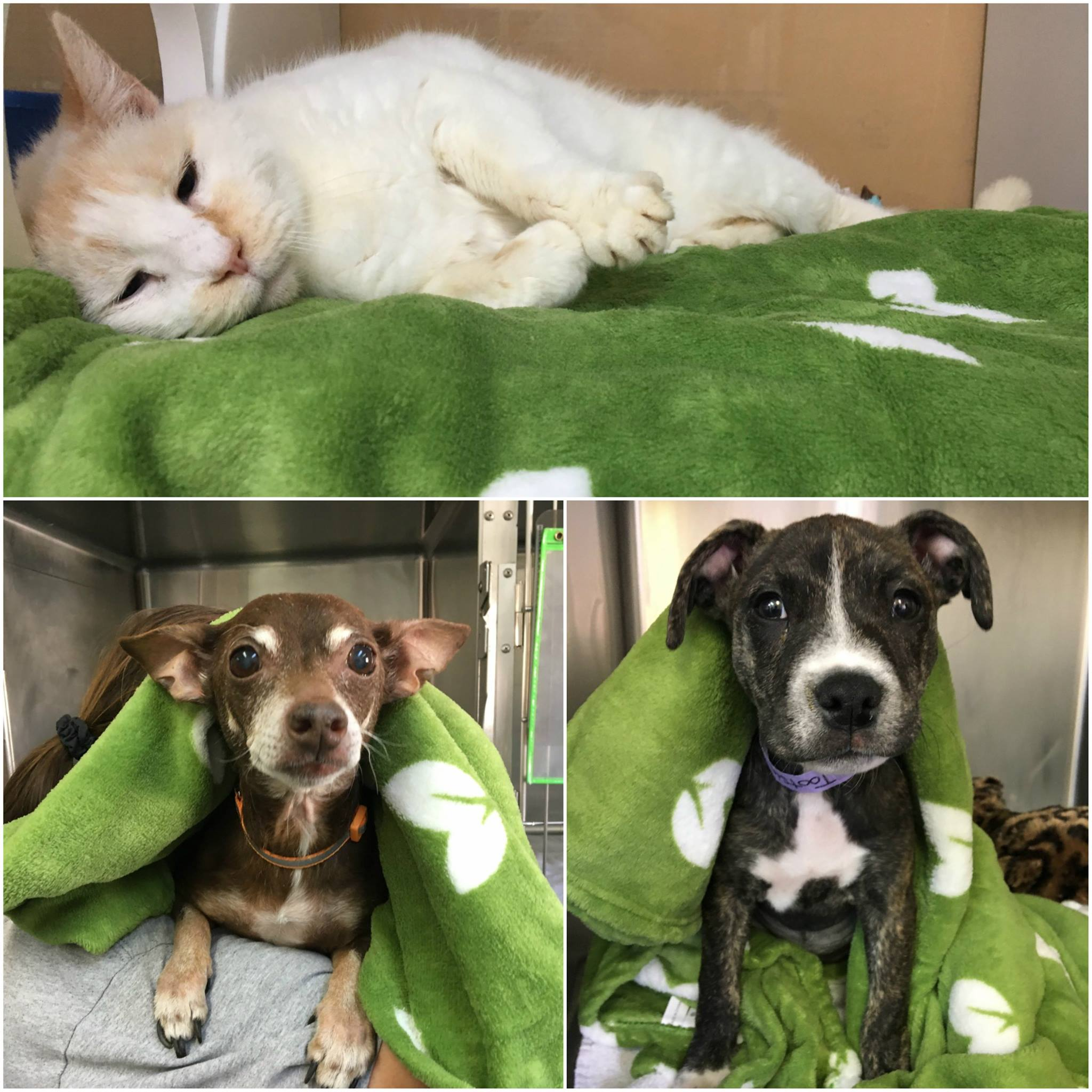 COJ.net - Animal Care and Protective Services