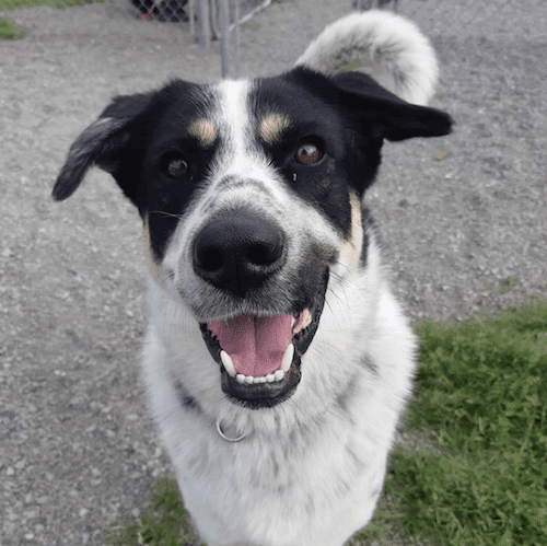 Lincoln-County-Humane-Society-squashed)