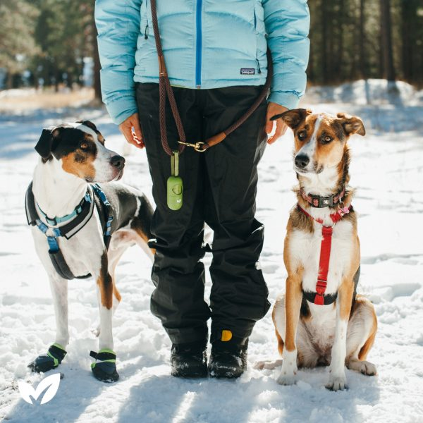 5 Winter Dog Care Tips