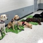 Prisoners-Assisting-Warrior-Services-PAWS-image2-2-squashed