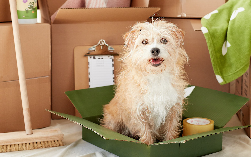 Renting with a dog? Win over (almost) any landlord with a Pet Resume
