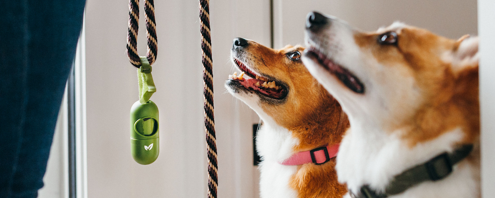 What should you feed your dog? Raw vs. Kibble