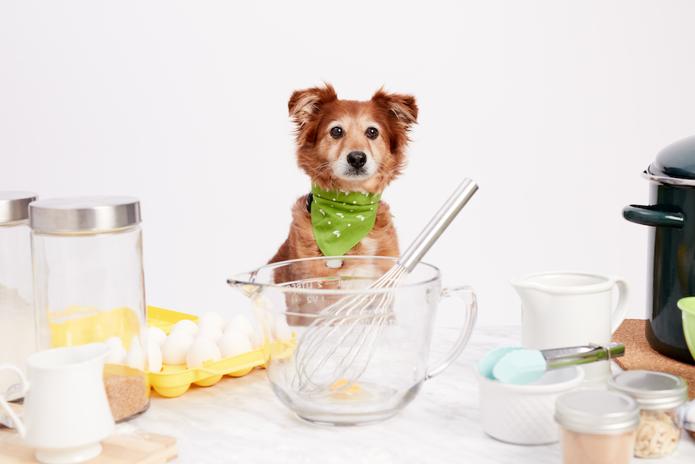 Birthday Cupcakes For Dogs Recipe