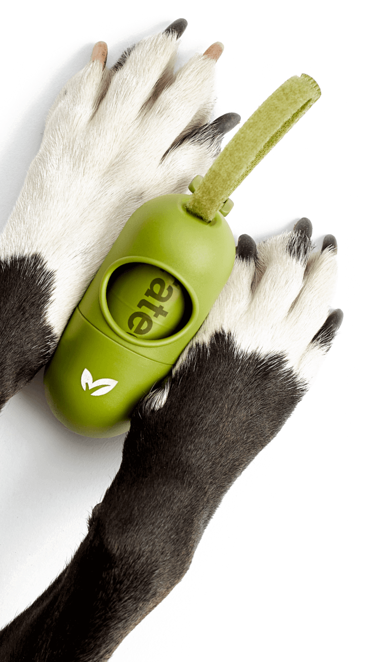 Close-up of black and white dog paws holding a green Earth Rated leash dispenser