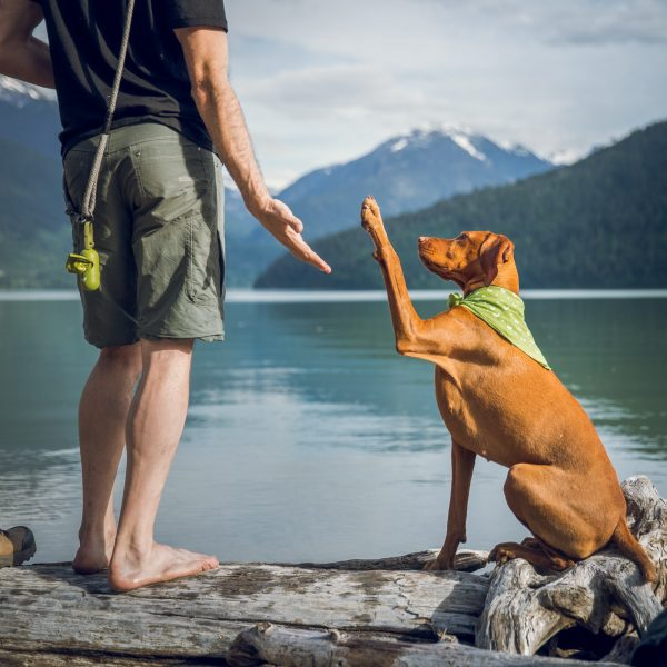 Camping for the first time with your dog?