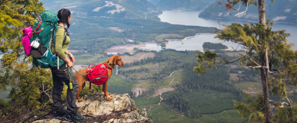 Use this Ultimate Dog Camping Checklist Before Your Next Hiking Trip with Dogs