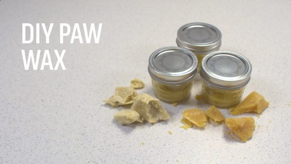 Make Your Own Dog Paw Wax