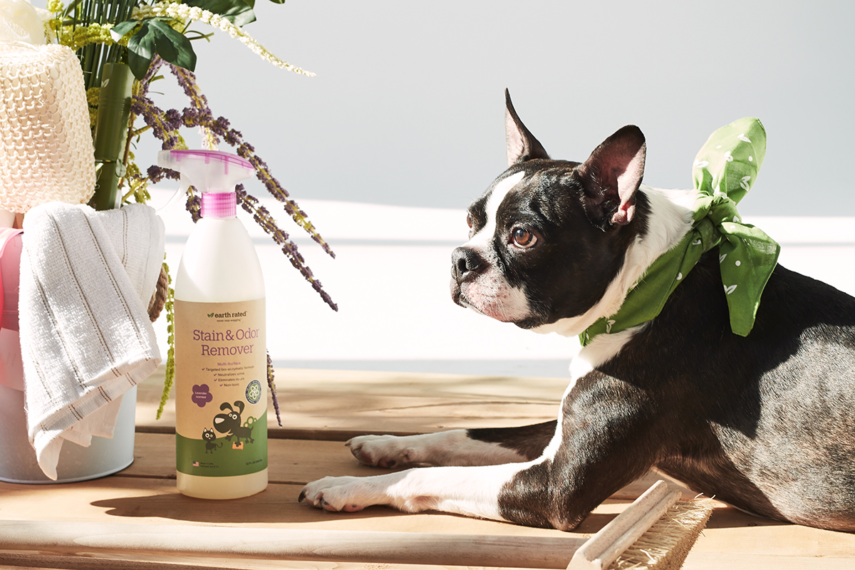 spring-cleaning-for-dog-people