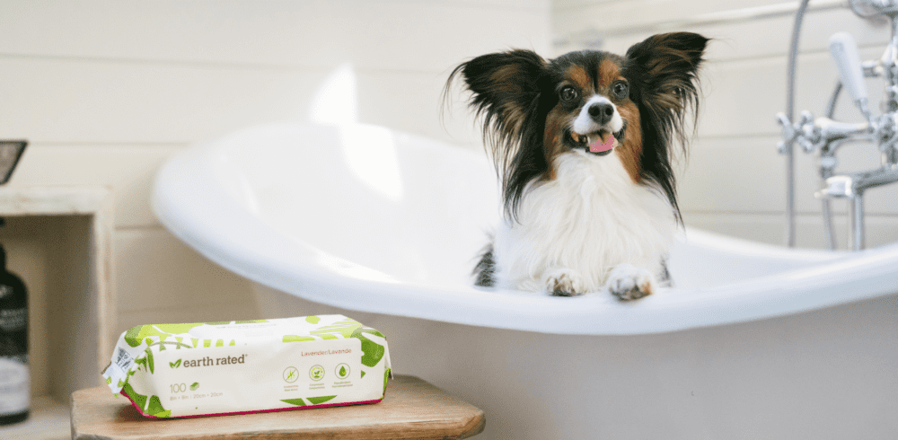 Why Your Dog Hates Baths (and What To Do About It)